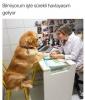 köpeklerin arabalara havlama sebebi