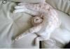insanın düz yatınca uyuyamaması
