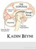 kadın beyni