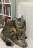 sözlük yazarlarının kedileri