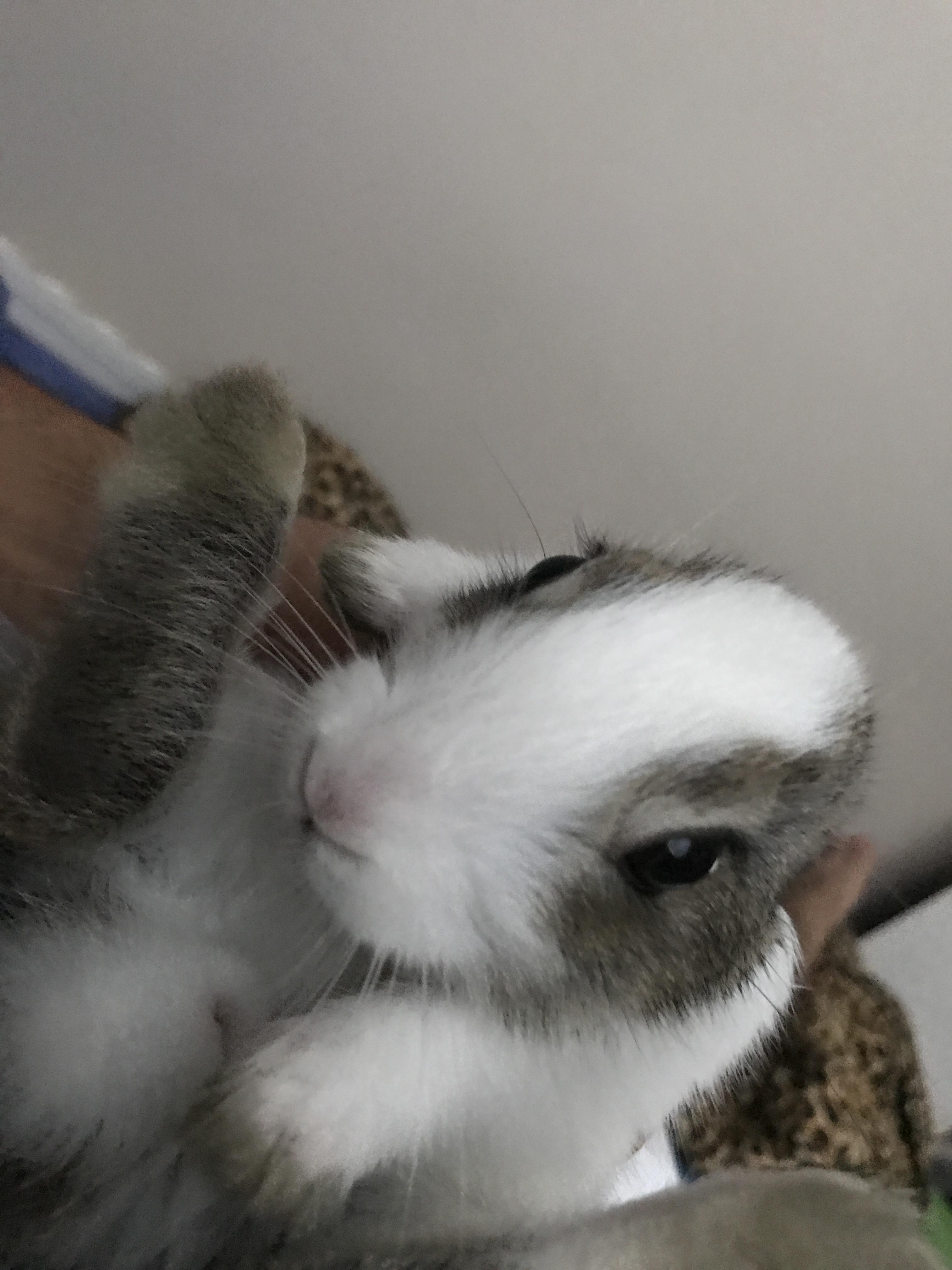 evde tavşan beslemek