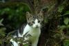 yeni zelanda kedisi