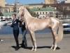 en güzel at fotoğrafları