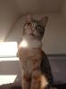 sözlüğe bir kedi bırak