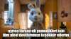 tavşan ralph in verdiği son mesaj
