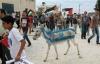 israil protestosunda hayvana yapılan eziyet