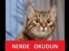 türk erkeklerinin sevişmeyi bilmemesi