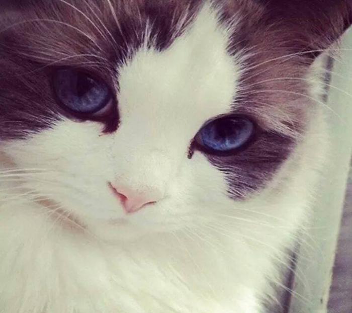 Крутые картинки на аву кошки, андроид