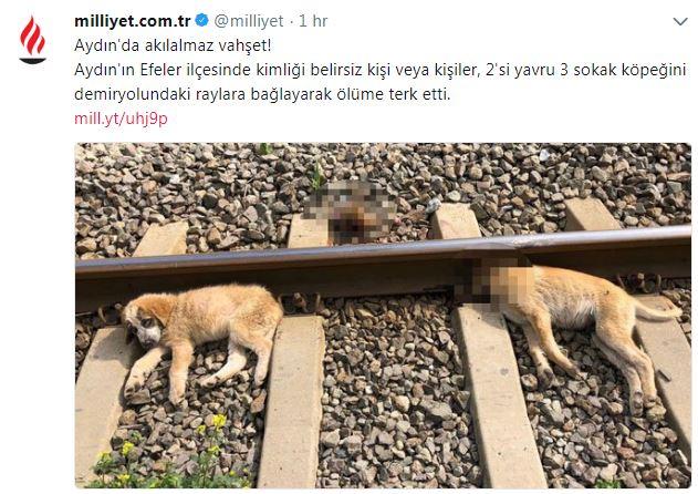 yavru köpekleri raylara bağlayıp öldürmek