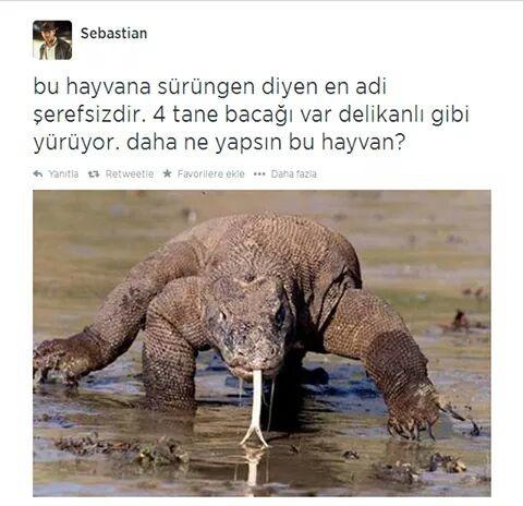 Komodo Ejderi 15290965 Uludağ Sözlük