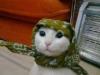 mor saçlı feminist dövmeli solcu kedisi olan kız