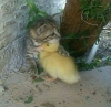dişi kedi