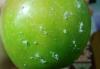 elmaların üzerine parafin sıkılması