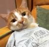 geceye bir kedi bırak