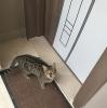 kızların kedi merakı
