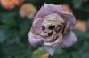 kadınlar çiçektir ama hangi çiçek