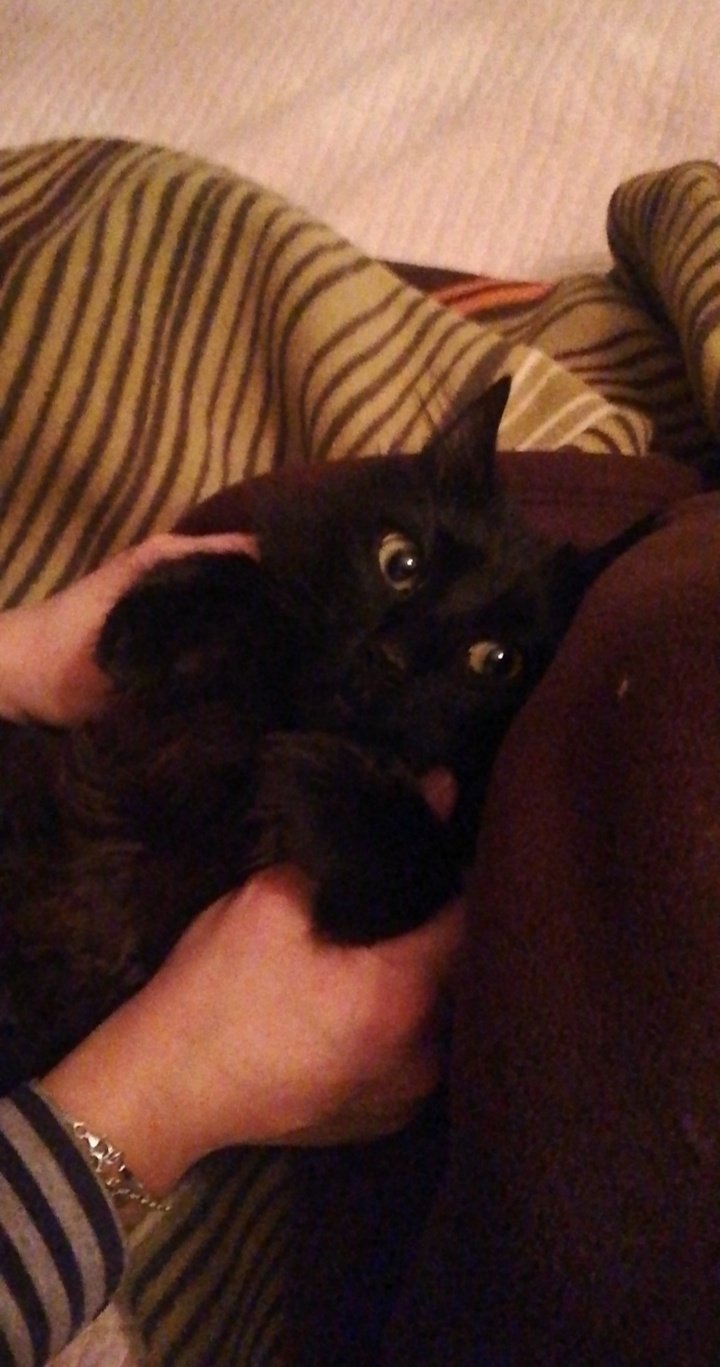 kara kediyi sevmek