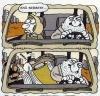 araba süren erkek gerginliği