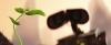 wall e deki filiz hangi bitkiye ait